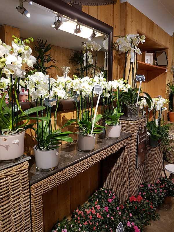 bloemen-kopen-den-haag