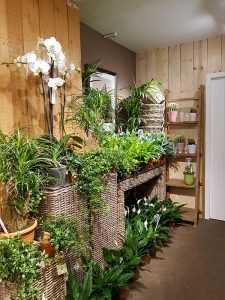 groene-kamerplanten-den-haag