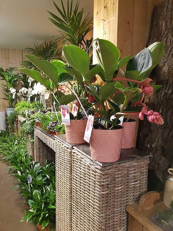 kamerplanten-den-haag