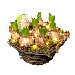 Hyacintenmand_met_lampjes
